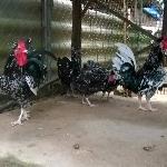 Cách làm cánh gà quý phi