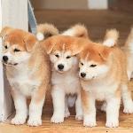 Kỹ Thuật nuôi chó
