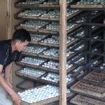 Kinh nghiệm ấp trứng vịt