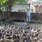 kinh nghiệm chăn nuôi vịt trời