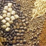 Nhập khẩu thức ăn chăn nuôi 2 tháng đầu năm 2016 giảm 22,16%