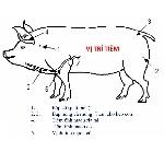 Hướng dẫn lịch tiêm vacxin cho lợn an toàn và hiệu quả nhất