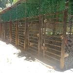 Hướng dẫn làm chuồng gà nuôi gà khỏe và mau lớn