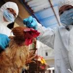 Biện pháp phòng và kiểm soát bệnh cúm gia cầm