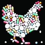 Hướng dẫn sử dụng kháng sinh trong chăn nuôi đúng cách