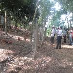 Mô hình chăn nuôi gà thả vườn theo tiêu chuẩn VietGAHP