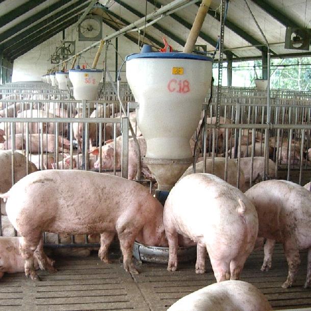 Liều thuốc trộn vào 1 tấn thức ăn cho lợn nuôi thịt.