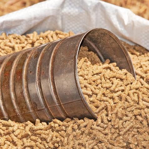 Đánh giá chất lượng một số nguyên liệu thức ăn chăn nuôi qua cảm quan và những kĩ thuật đơn giản