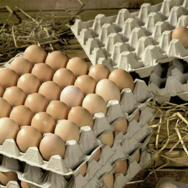 Cung cấp vỉ giấy, khay đựng trứng