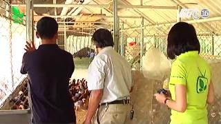 Video những sai lầm thường gặp khi nuôi gà thả vườn