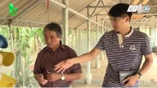 Video hướng dẫn dựng chuồng nuôi gà theo chuẩn
